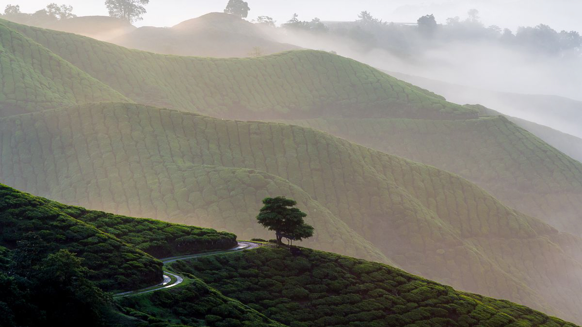 WE HAVE THE BEST TOURS IN  CAMERON HIGHLANDS
